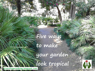 5 ways to make your garden look tropical Abbotsbury Green Fingered Blog