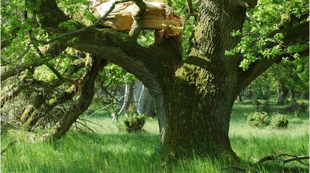 Danish Untouched Forest