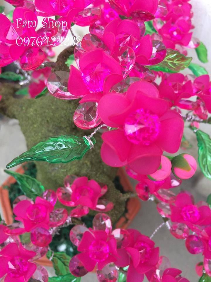 Canh hoa dao lam goc bonsai mai dao o Cau Dat