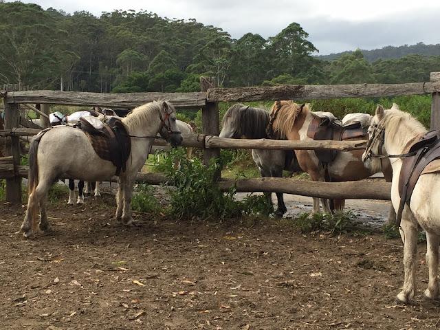 horses or ponies
