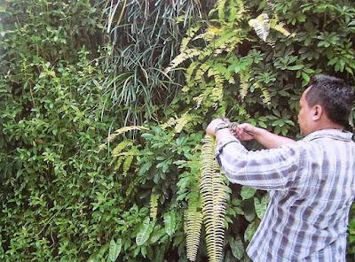 Tukang Taman Vertikal Surabaya | Vertical Garden 19