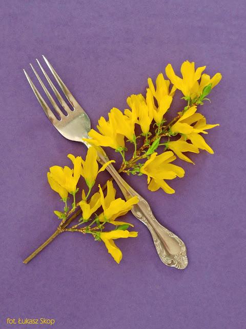 jadalne kwiaty forsycji