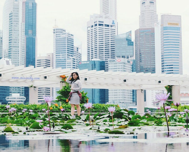 lotus pond in front of artscience museum singapore