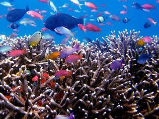 Perairan Laut Indonesia dan Potensinya yang Besar