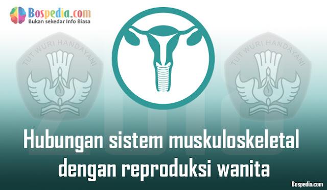 Hubungan sistem muskuloskeletal dengan reproduksi wanita