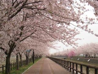 B O N J O U R M A D E M O I S E L L E : Aishiteru, Japan