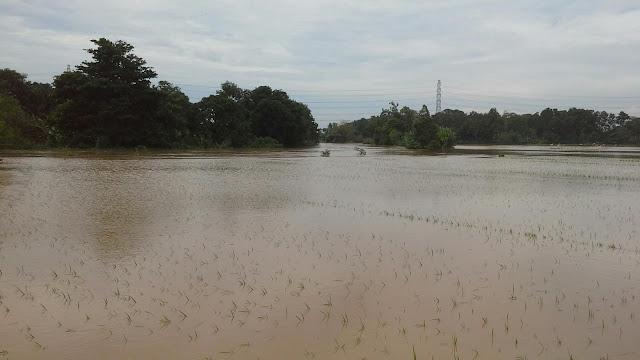 Sungai ciasem meluap rendam lahan pertanian