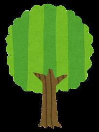 木の成長過程のイラスト8