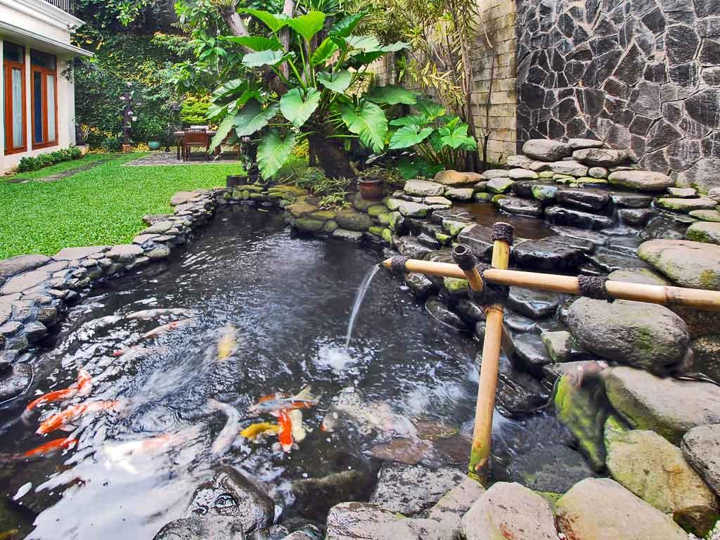 40 Gambar Kolam Ikan Minimalis Kolam Ikan Koi Kolam Ikan Hias Dan