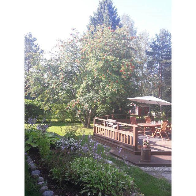 puutarha ja terassi kesalla