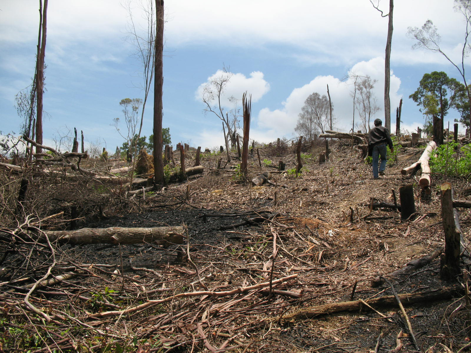Dampak Eksploitasi Ekosistem Yang Berlebihan Dampak Eksploitasi