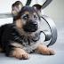 La ciencia confirma que los perros pueden identificar si alguien es una mala persona