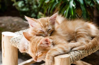 Posisi Tidur Pasangan Singkap Keintiman Dalam Hubungan