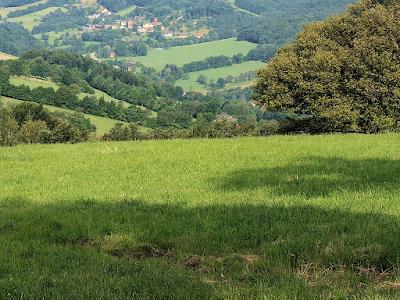 zieleń, przyroda, wieś, łąka, 20 lipca, święto Peruna; źródło: Unsplash