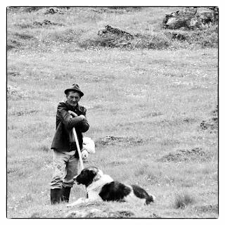 Pásztor és a kutyája egy erdélyi legelőn