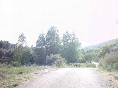 La pileta, camino, pantano de Pena, embalse, finca, almendros, olivos 32