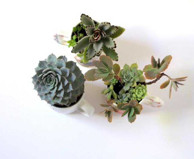 Indoor plant decorating