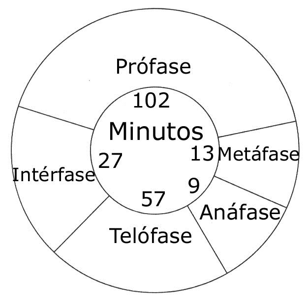 Prof. Job Fonsêca: Núcleo, cromossomos, ciclo celular e mitose