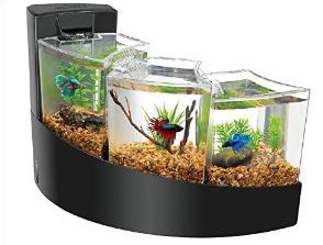 Betta Fish Tanks Bentuk Akuarium Ikan Cupang Indah Cantik