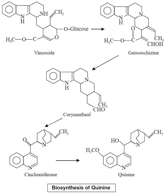 Biosynthesis of Quinine