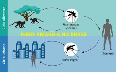 Brasil febre amarela e 38 mortes