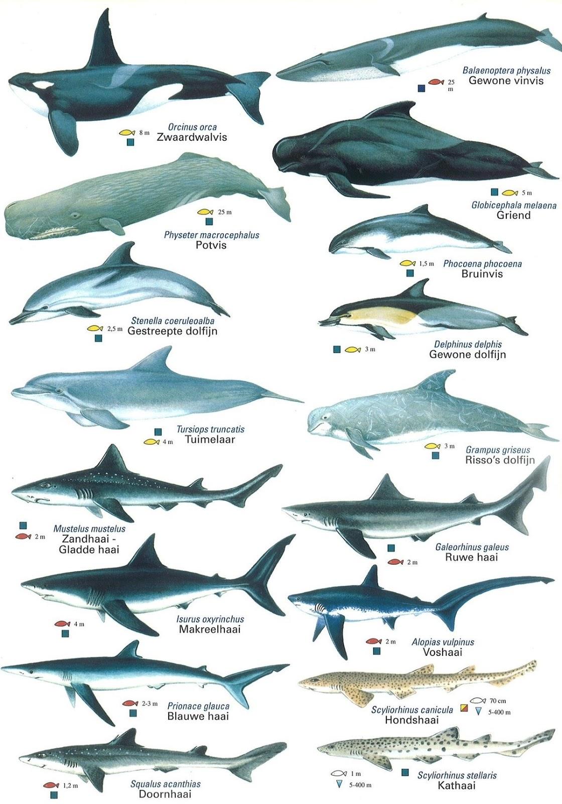 Tubarões, Baleias e Golfinhos