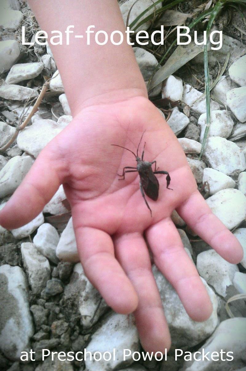 Backyard Bugs: Leaf-footed Bug | Preschool Powol Packets