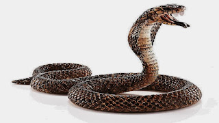 La storia del serpente a sonagli - Buddha