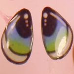 http://agumirumis.com/2015/05/30/diy-como-hacer-tu-misma-unos-ojos-para-pegar/