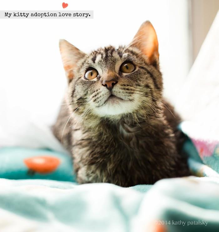 Sochi Mr White A Kitty Adoption Love Story For Valentine S Day