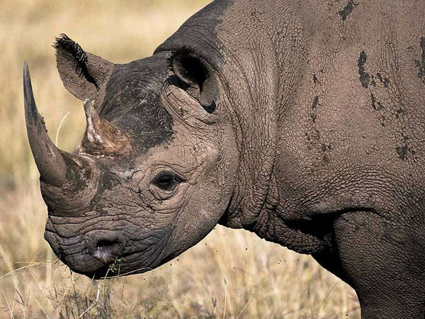 Save Our Species Critically Endangered Species Of The