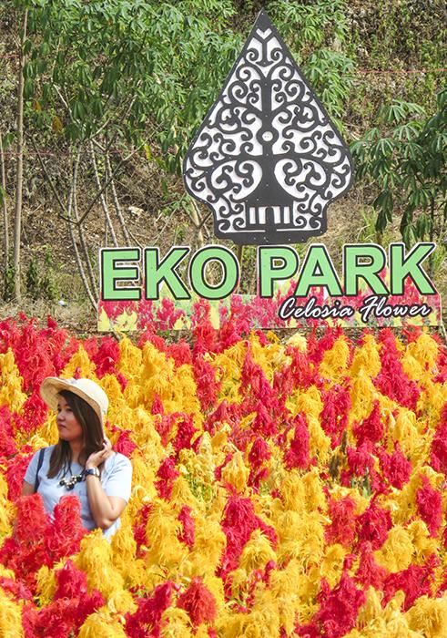 Taman Bunga Celosia, Gunung Kidul