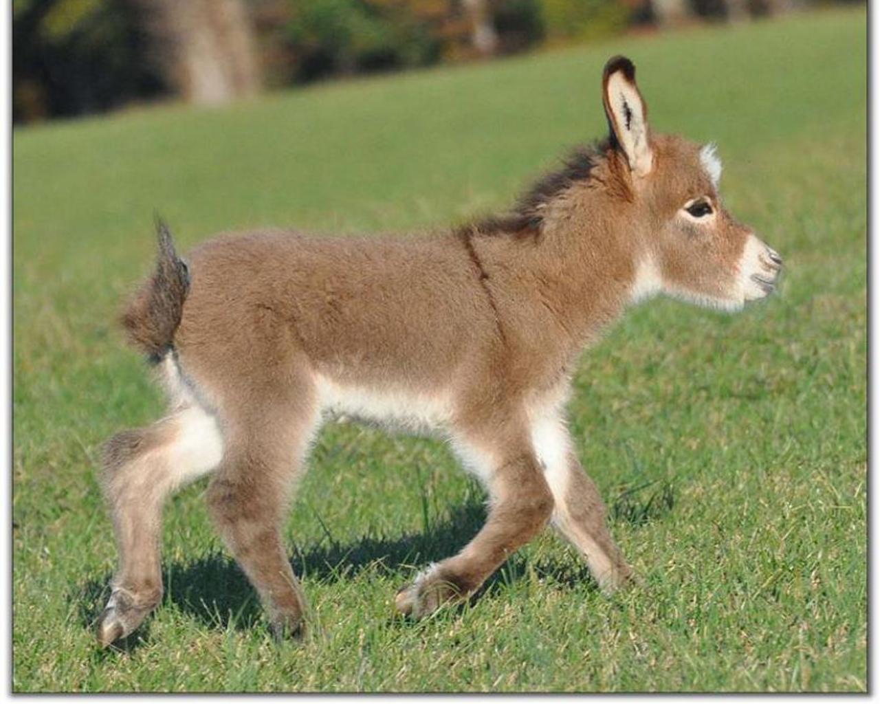 Baby Animals Considered Kids