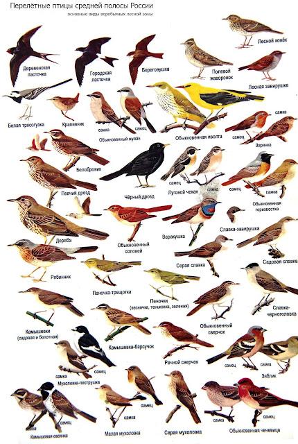 получился красивый атлас птицы подмосковья фото с названиями всей