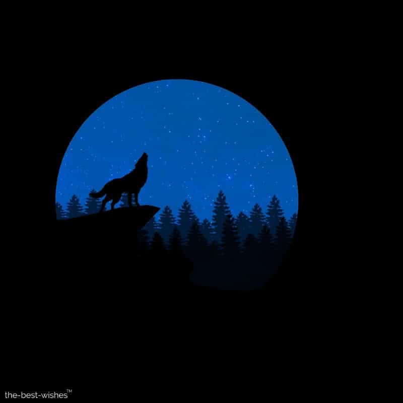 wolf howling night animal wallpaper