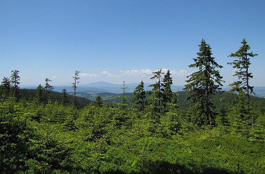 Widok ze stoków Turbacza w kierunku Babiej Góry.
