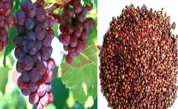 The benefits of grape seed .