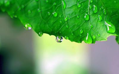 Gambar Hujan di Atas Daun Sedih Rintik Hujan Rinai Hati Galau Terbaru