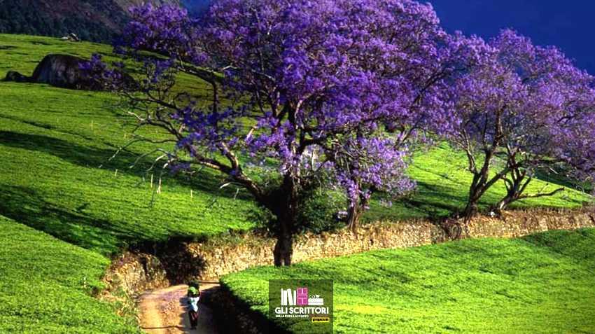Viaggio in Tanzania: il grande albero e le verdi colline di Hemingway
