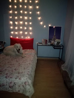 dog on bed books fairylights