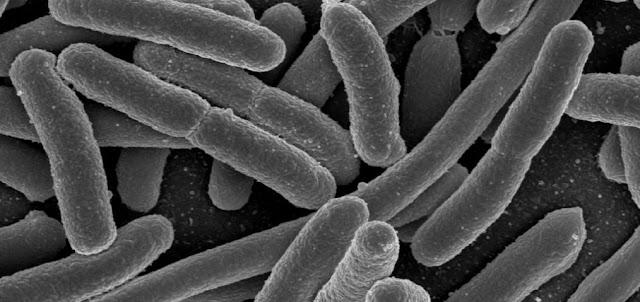 Celulas y biologia