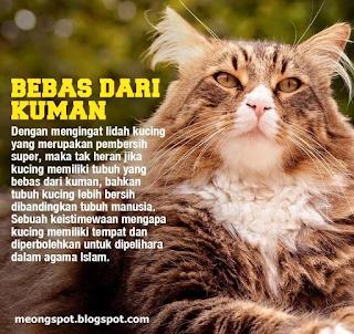 Tubuh Kucing Lebih Bersih Dibandingkan Tubuh Manusia