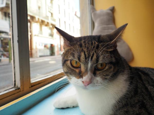 le chat mallows cat café paris
