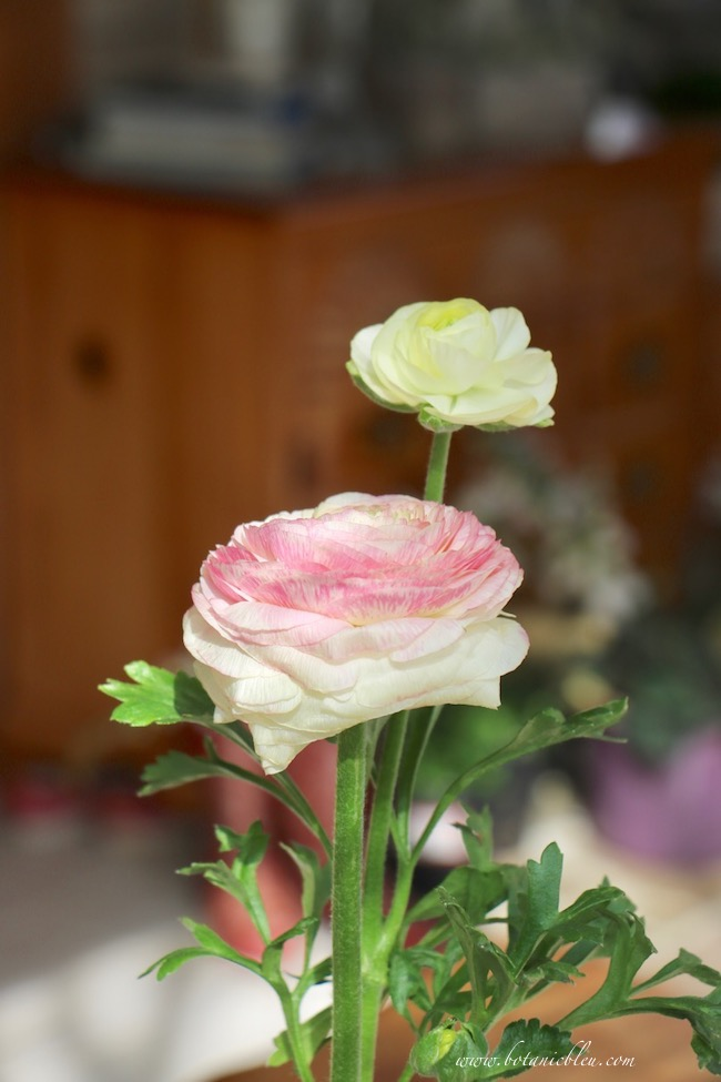 Easter tablesetting pink ranunculus centerpiece