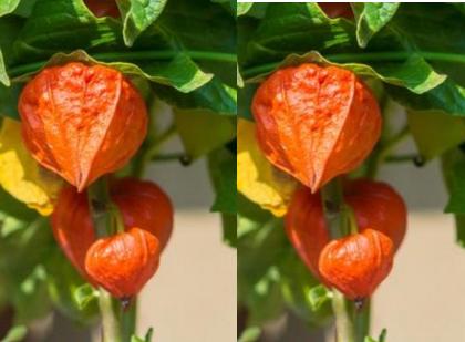 Ashwagandha Improves Heart Health