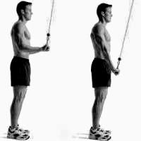 Rutina pesas ectomorfo extensión tríceps