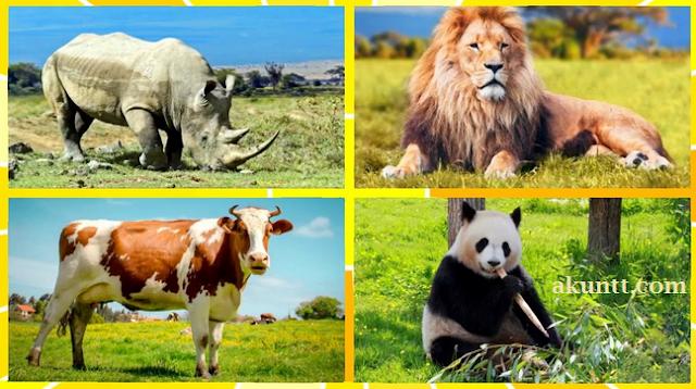 hewan yang hidup di darat