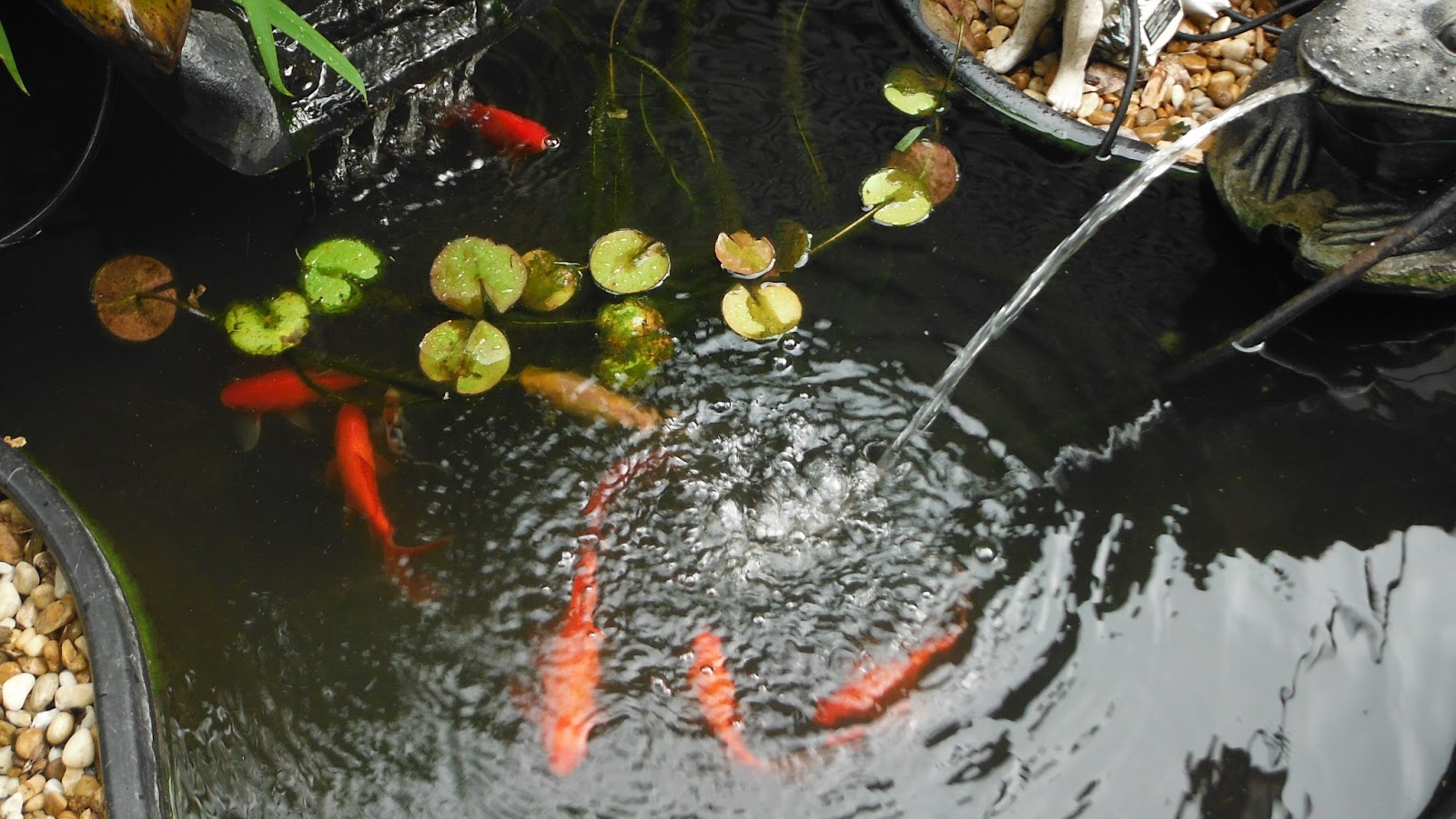 Holding Patterns How I Fell Into The Koi Pond And The