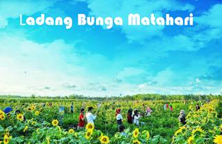 Wisata Ladang Bunga Matahari di Bantul Yang Hits dan Cocok Untuk Hunting