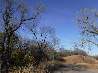 trees, shrubs, and grasses against a blue sky at Stone State Park in Sioux City, Iowa